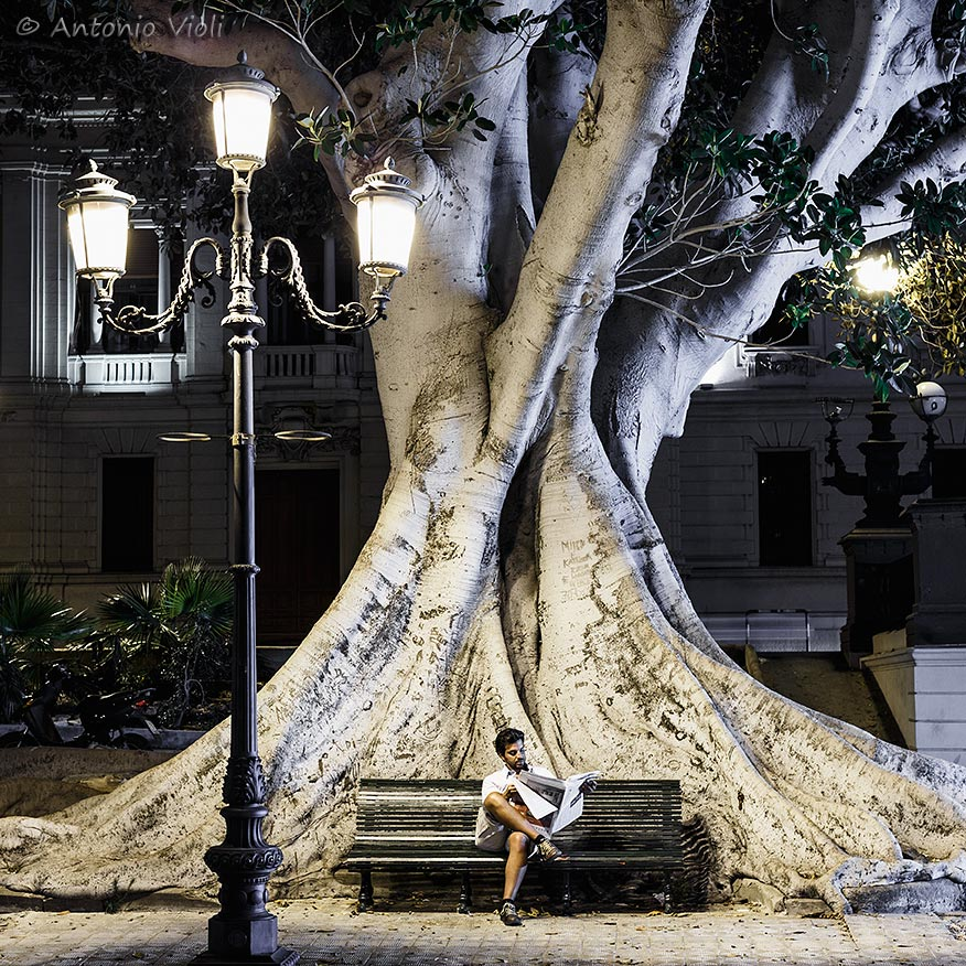 A solitary reader with behind a huge ficus macrophylla tree, Reggio Calabria, Italy.