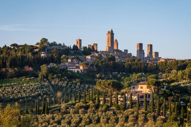 Tuscan countryside with rows of olive trees and the skyline of San Gimignano at sunset