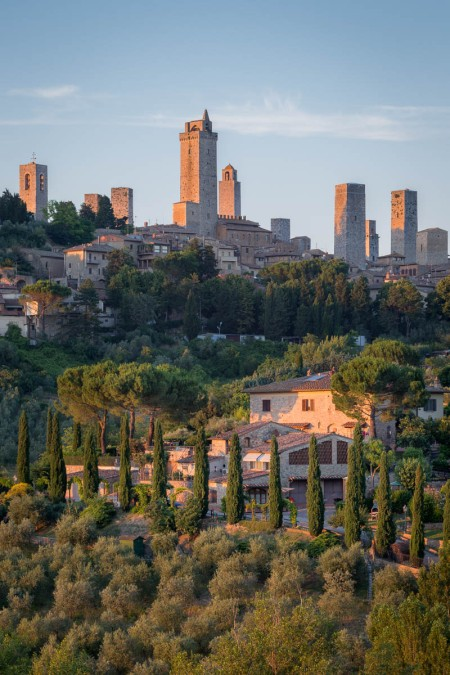 Tuscan countryside with rows of olive trees and the skyline of San Gimignano at sunset, Tuscany, Italy.