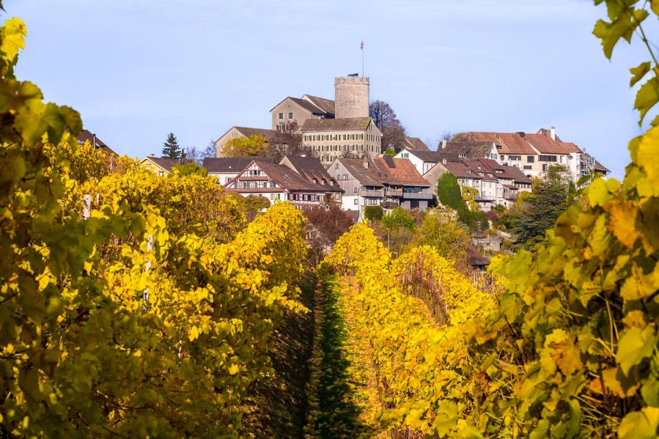 Vineyard in Autumn, Regensberg, Switzerland
